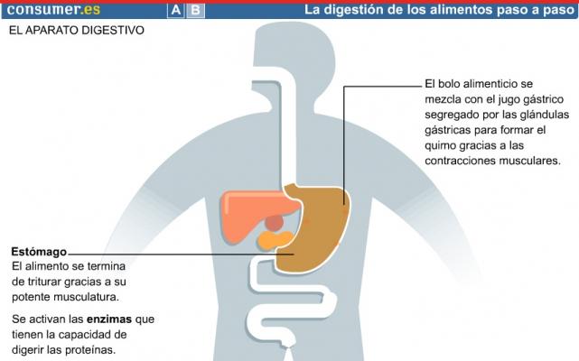 Infografía educativas Alimentos secundaria