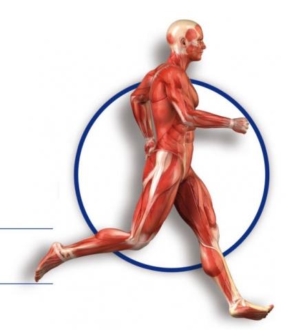 juego Recortable de la figura humana: músculos, articulaciones y huesos