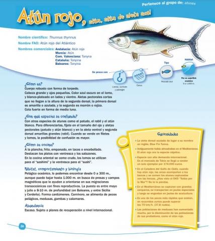 Cómo son los peces